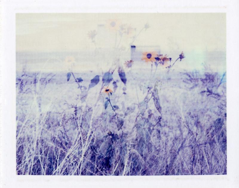 moominsean, Polaroid 195, ID-UV, El Mirage, AZ / flickr